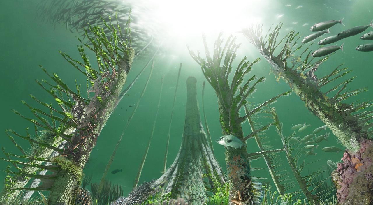 Young & Ayata - YAP Istanbul - Future Underwater Habitat